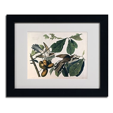 Trademark Fine Art 'Yellow-Billed Cuckoo' 11