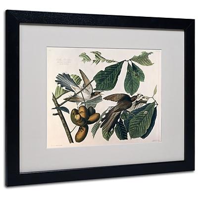 Trademark Fine Art 'Yellow-Billed Cuckoo' 16