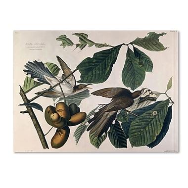 Trademark Fine Art 'Yellow-Billed Cuckoo' 14