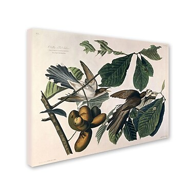 Trademark Fine Art 'Yellow-Billed Cuckoo' 26