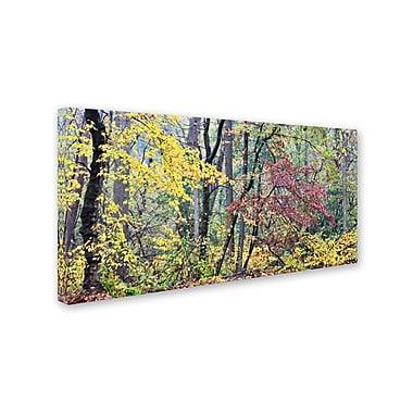 Trademark Fine Art 'Autumn Mist' 20