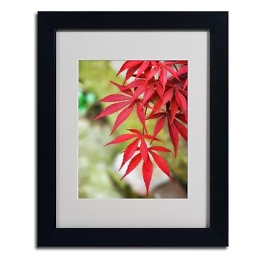 Trademark Fine Art 'Japanese Maple'