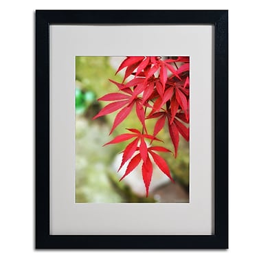 Trademark Fine Art 'Japanese Maple' 16