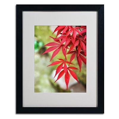 Trademark Fine Art 'Japanese Maple' 16