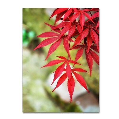 Trademark Fine Art 'Japanese Maple' 22
