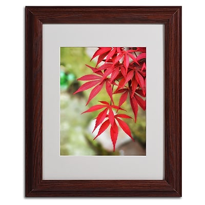 Trademark Fine Art 'Japanese Maple' 11