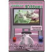 Vat19 Ambient Kittens DVD
