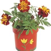 Educraft® Authentic Flower Garden Craft Kit, 50/Pack