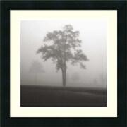 "Amanti Art Jamie Cook ""Fog Tree Study I"" Framed Print Art, 16"" x 16"""