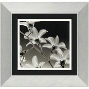 "Amanti Art Steven N. Meyers ""Orchid Denrobium"" Framed Print Art, 14.38"" x 14.88"""