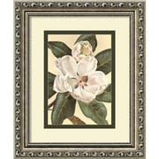 """Amanti Art Waltraud Fuchs Von Schwarzbek """"Afternoon Magnolia"""" Framed Print Art, 11.88"""" x 9.88"""""""