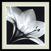"Amanti Art Steven N. Meyers ""Amaryllis 1"" Framed Print Art, 21"" x 21"""
