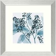 "Amanti Art Steven N. Meyers ""Eucalyptus II"" Framed Print Art, 14.12"" x 14.12"""