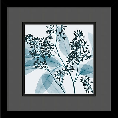"""""Amanti Art Steven N. Meyers """"""""Eucalyptus II"""""""" Framed Print Art, 13 1/4"""""""" x 13 1/4"""""""""""""" 966900"