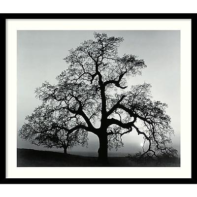 """""""""""Amanti Art Ansel Adams """"""""""""""""Oak Tree, Sunset City, California, 1962"""""""""""""""" Framed Print Art, 23"""""""""""""""" x 27"""""""""""""""""""""""""""" 967004"""