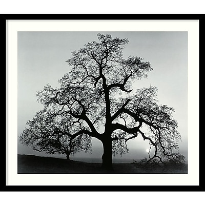 Amanti Art Ansel Adams