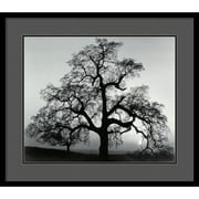 "Amanti Art Ansel Adams ""Oak Tree, Sunset City, California, 1962"" Framed Print Art, 25"" x 29"""