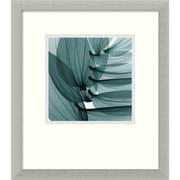 "Amanti Art Steven N. Meyers ""Lily Leaves"" Framed Print Art, 16 3/4"" x 14 3/4"""