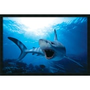 "Amanti Art  ""Shark"" Framed Animal Art, 25.38"" x 37.38"""