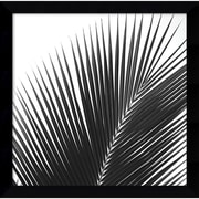"Amanti Art Jamie Kingham ""Palms 14 (Detail)"" Framed Print Art, 12.75"" x 12.88"""