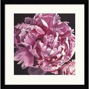 "Amanti Art Elizabeth Hellman ""Peony I"" Framed Print Art, 17"" x 16.88"""