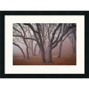 "Amanti Art David Lorenz Winston ""Pilot Road Trees"" Framed Print Art, 18.88"" x 24.62"""
