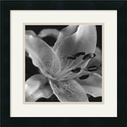 "Amanti Art Gaetano Art Group ""Speckled Lily"" Framed Print Art, 15.88"" x 15.88"""