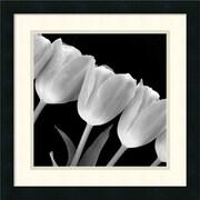 "Amanti Art ""Tulip Line"" Framed Print Art, 18"" x 18"""