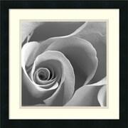 "Amanti Art ""Rose Spiral II"" Framed Print Art, 18"" x 18"""
