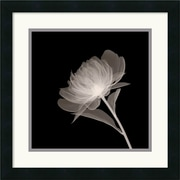 "Amanti Art ""Full Bloom"" Framed Print Art, 18"" x 18"""