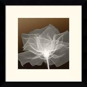 "Amanti Art ""Sheer Delicacy"" Framed Print Art, 13.12"" x 13.12"""