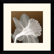 "Amanti Art ""Ruffled Elegance"" Framed Print Art, 13.12"" x 13.12"""