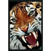 "Amanti Art ""Bengal Tiger Close-Up"" Framed Print Art, 37.38"" x 25.38"""