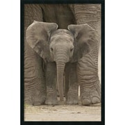 "Amanti Art ""Big Ears - Baby Elephant"" Framed Print Art, 37.38"" x 25.38"""