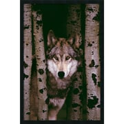 "Amanti Art  ""Gray Wolf"" Framed Animal Art, 37.38"" x 25.38"""