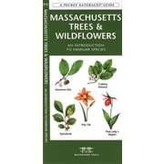 Massachusetts Trees & Wildflowers James Kavanagh Paperback