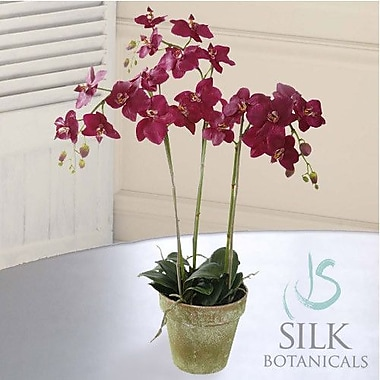 Jane Seymour Botanicals Phalaenopsis Orchid in Pot