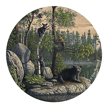 Thirstystone Bears Coaster (Set of 4)