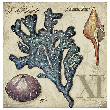 Thirstystone Sea Life XI Occasions Coasters Set (Set of 4)