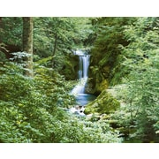 Brewster Home Fashions Ideal Decor Waterfall in Spring 144' x 100'' Wall Mural