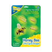 Insect Lore Bee Life Cycle Stages, Grades PreK-3