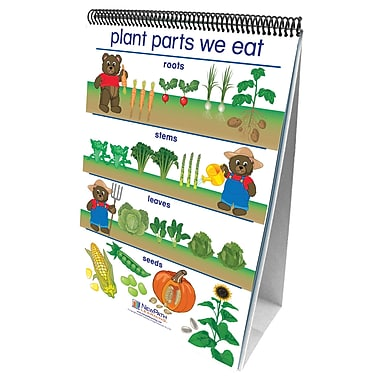 New Path Learning – Ensemble de tableaux multifeuilles « All About plants Curriculum Mastery » (NP-340021)