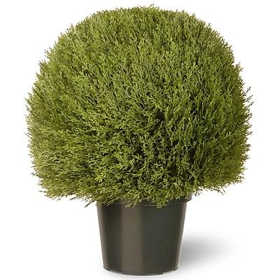 National Tree Co. Cedar Desk Top Plant in Pot; 24'' H x 20'' W x 20'' D