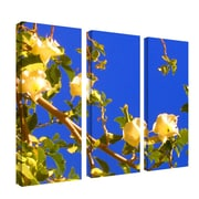 "Trademark Fine Art 12"" x 32"" Wood Wall Art"