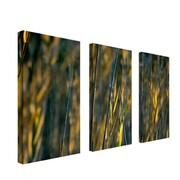 """Trademark Fine Art 12"""" x 24"""" Wooden frame Canvas Wall Art"""