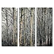 "Trademark Fine Art 14"" x 32"" Wooden Frame Gallery Wrapped Canvas Art"