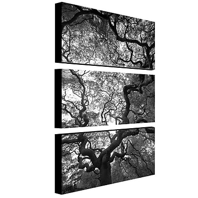 "Trademark Fine Art 16"" x 32"" Canvas Gallery Wrapped Art"
