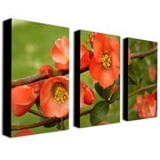 "Trademark Fine Art 18"" x 32"" Wooden Frame Canvas Art"