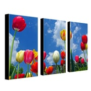 "Trademark Fine Art 12"" x 24"" Wooden Frame Gallery Wrapped Canvas"