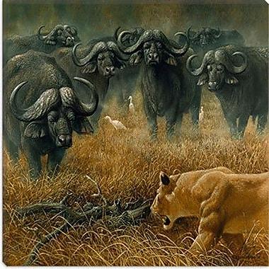 iCanvas ''Lioness and Cape Buffalos'' Canvas Wall Art by Harro Maass; 18'' H x 18'' W x 0.75'' D